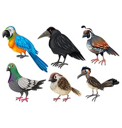 Different kind of wild birds vector image