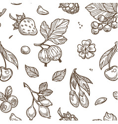 fruits raspberries and berries sketches seamless vector image