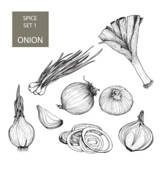 Onion Set of vector