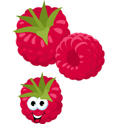 raspberry fresh raspberry berries isolated on vector image