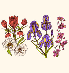 wild flowers iris and poppy set of wedding vector image