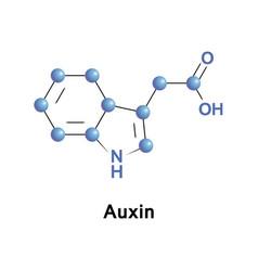 Auxins plant hormones vector