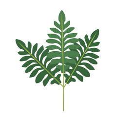 Branch leaves plant tree natural botanical image vector