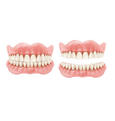 Denture dental teeth and jaw realistic prosthesis vector