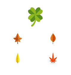 Flat icon foliage set of maple alder leafage and vector