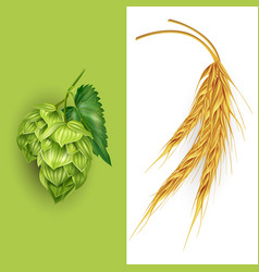 Hops and malt vector