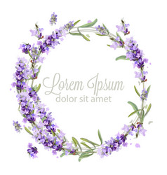 Lavender wreath card watercolor flowers vector