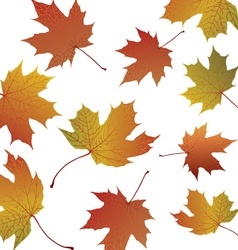 Maple leaves on transparent background vector