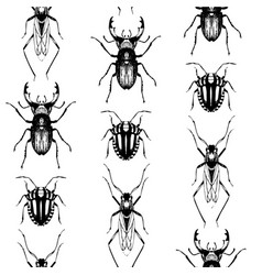 Seamless pattern with bugs and beetles vector