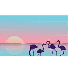 collection stock of flamingo silhouette scenery vector image