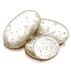 engraving potato vector image