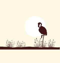 Flamingo beauty landscape silhouettes collection vector