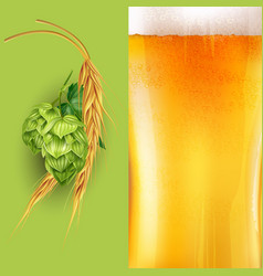 Hops malt and beer vector
