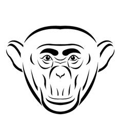Line art Chimpanzee vector image