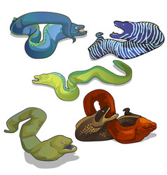 set colorful moray eels isolated on white vector image