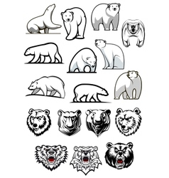 White polar bear cartoon characters vector image