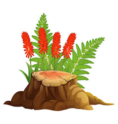 Aloe vera with red flowers on white background vector