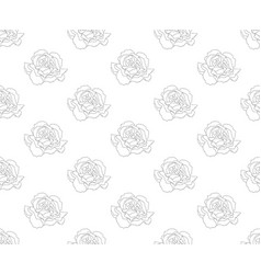 carnation seamless on white background vector image