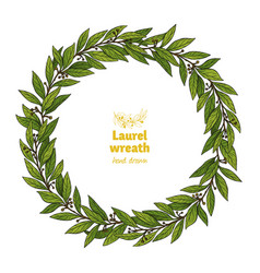 Green laurel bay leaves wreath vector