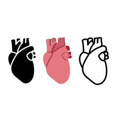 Real human heart in flat style vector