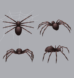 Spider realistic nature insects crawl venom black vector