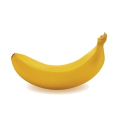 Yellow ripe banana vector image