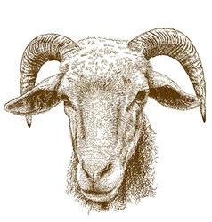 engraving rams head vector image vector image
