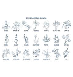 Best medicinal herbs for eczema vector