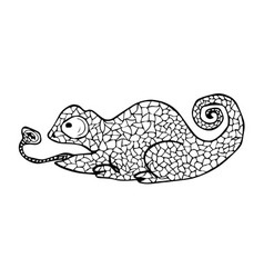 Chameleon with doodle pattern coloring book vector