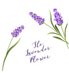 The lavender wreath vector