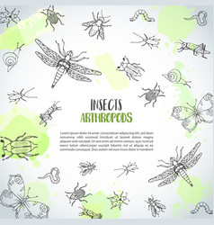 bugs insects hand drawn background pest control vector image