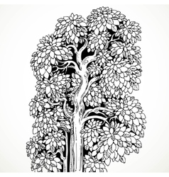 Graphically drawing black ink tree with luxuriant vector image