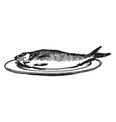 Whole fish on a plate vintage vector