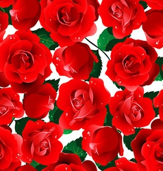Red roses seamless pattern on a white background vector image