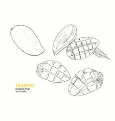 set of mangoeshand draw sketch vector image vector image