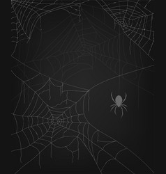 a set several spider webs on a dark background vector image
