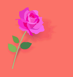 beautiful pink rose with green leaf on pink vector image