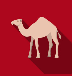 Camel icon in flat style isolated on white vector