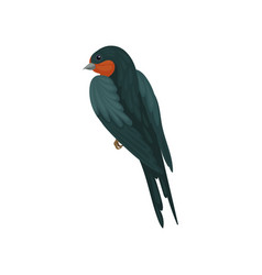 Graceful swallow bird with colored plumage back vector