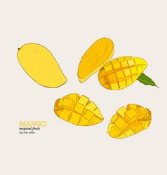 set of mangoeshand draw sketch vector image