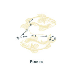 zodiacal constellation pisces on background of vector image