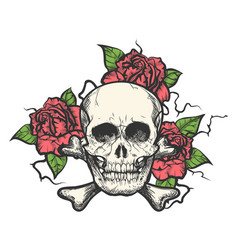 skull with rose flowers vector image
