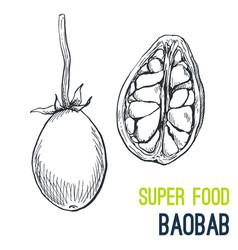 Baobab super food hand drawn sketch vector