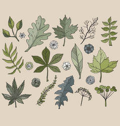 hand drawn leafs and plants vector image