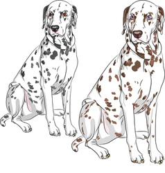 serious dog Dalmatian vector image