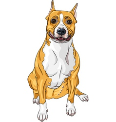 American Staffordshire Terrier vector image