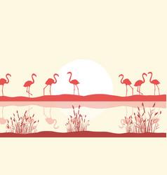 flamingo scene on lake silhouette vector image