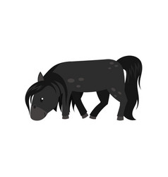 Beautiful black horse pony on vector