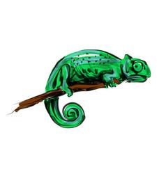 color line sketch chameleon vector image