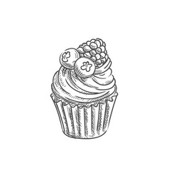 Muffin with blueberries raspberry isolated cupcake vector